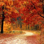 fall-autumn-red-season-large