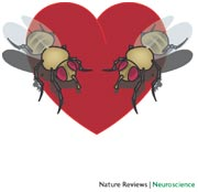 Flies in love