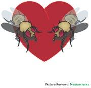 Flies in love