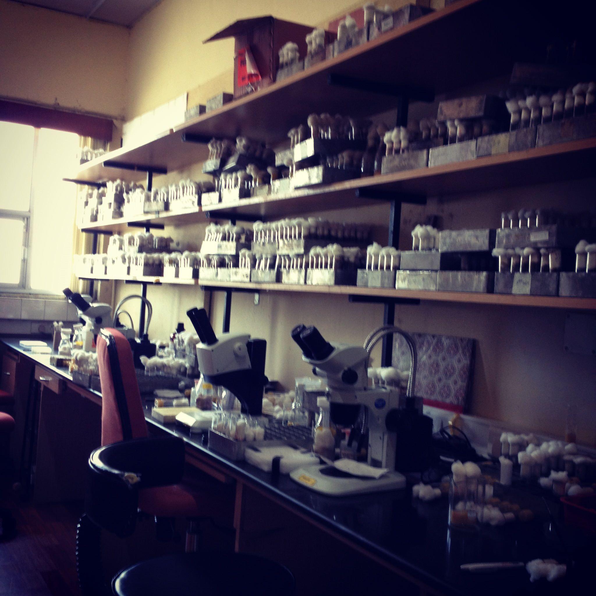 Tanvi's Lab2