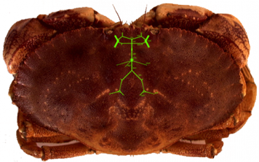 crab_stns_overlay