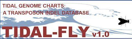 tidal fly banner