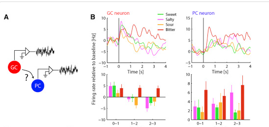 Recordings from taste and olfactory cortex