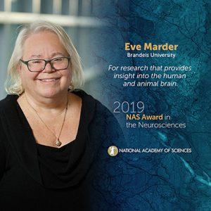Eve Marder NAS award