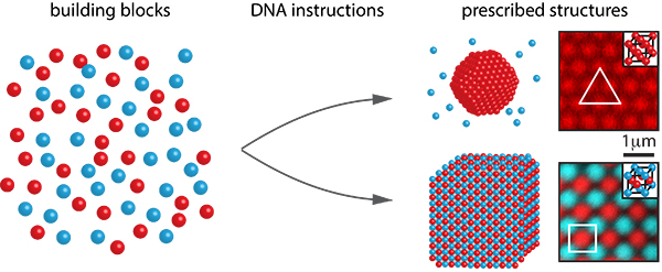 DNA instructions