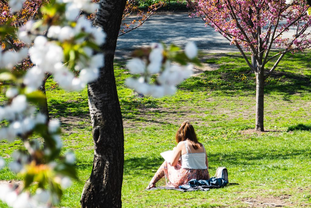 Photo of a young woman working on her course work in a city park