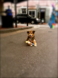 No internship is complete without seeing a cute pup on the street.