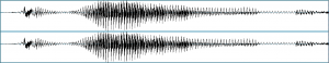 "waveform from a stereo recording of a young girl saying ""thrown"""