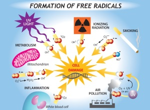 Damage by free radicals