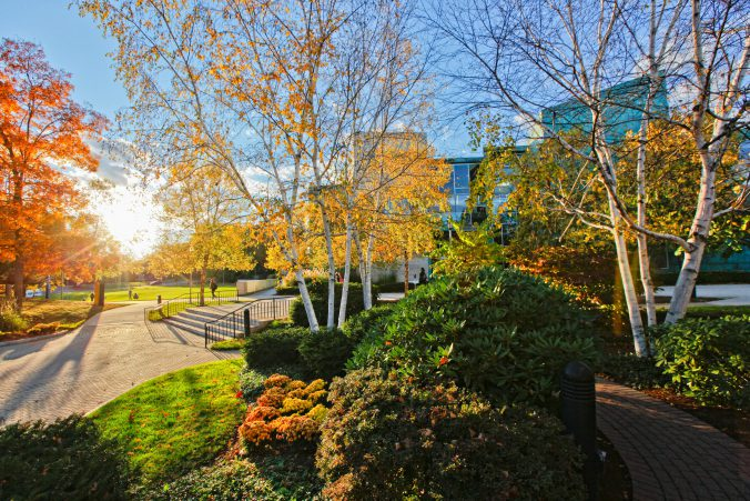 Brandeis University campus in the fall.